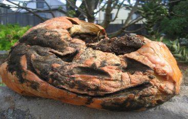 EDDNP #377 – L'Halloween des Pourris!