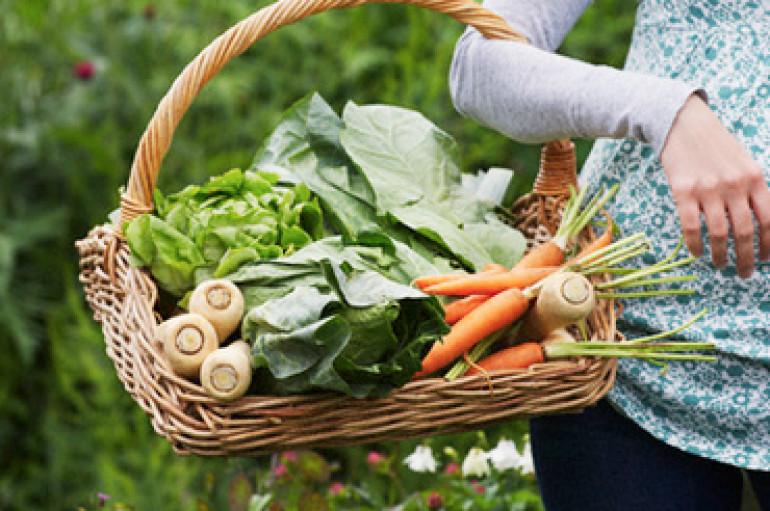 Les agriculteurs bio traînent Monsanto en justice