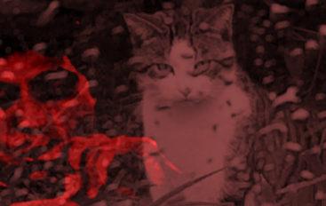 EDDNP #373 – J'ai enterré Tony Montana dans ma cour