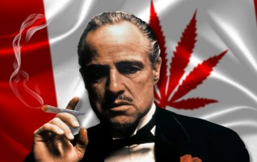 EDDNP #379 – Mafia.Gouv