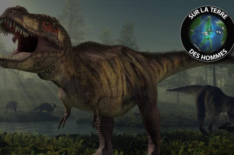 SLTDH – S05 – EP41: Le Tyrannosaurus Rex – Le roi des dinosaures